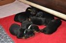 Blog 210 aneb Z novorozeňat batolata :-)