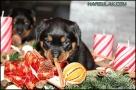 Krásný advent! :-)