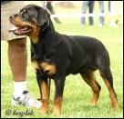 Clark vom Hause Freyland, mezitřída, psi