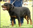 Oscar Della Val di Noto, třída mladých, psi