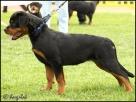 Nejlepší štěně, Elin vom Hause Edelstein